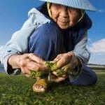Los beneficios de la dieta japonesa