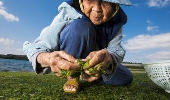 la dieta japonesa. Dietista - nutricionista